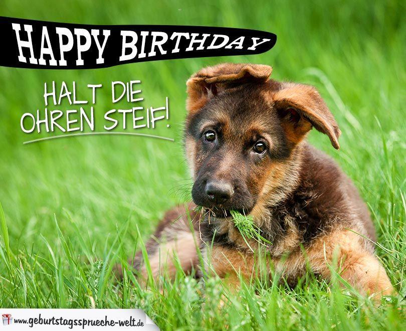 Geburtstagssprüche Für Hundeliebhaber  Schöne Karte zum Geburtstag für Hundeliebhaber und dem