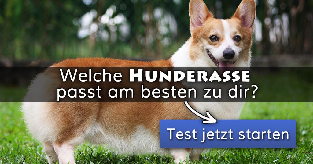 Geburtstagssprüche Für Hundeliebhaber  Welche Hunderasse passt am besten zu dir