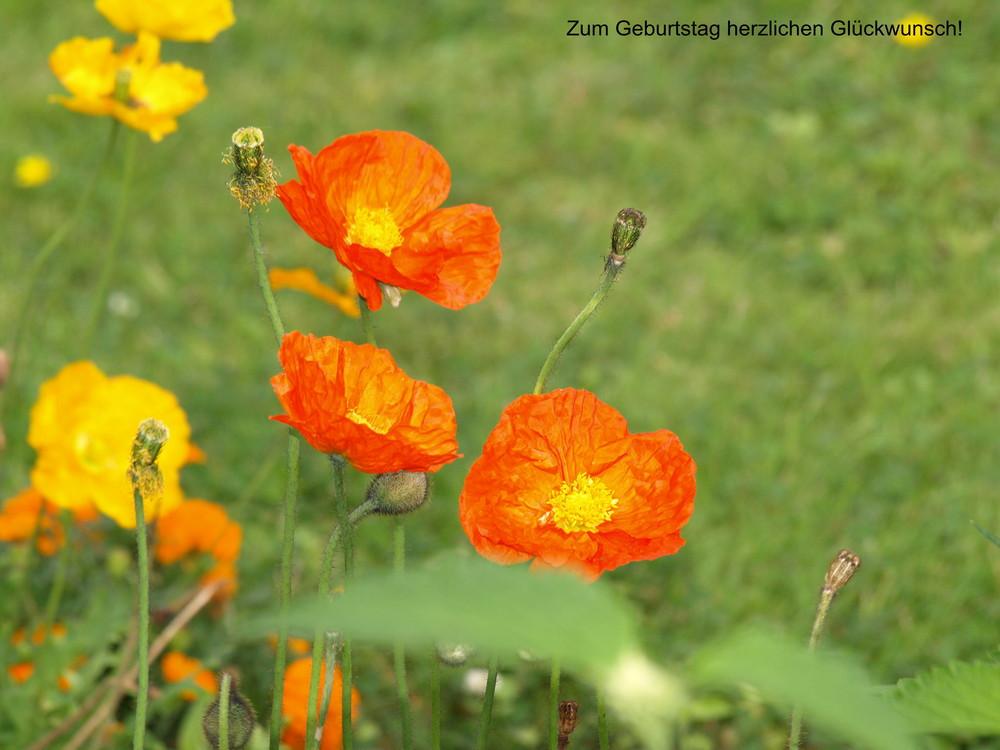 Geburtstagswünsche Bilder  Geburtstagswünsche Foto & Bild
