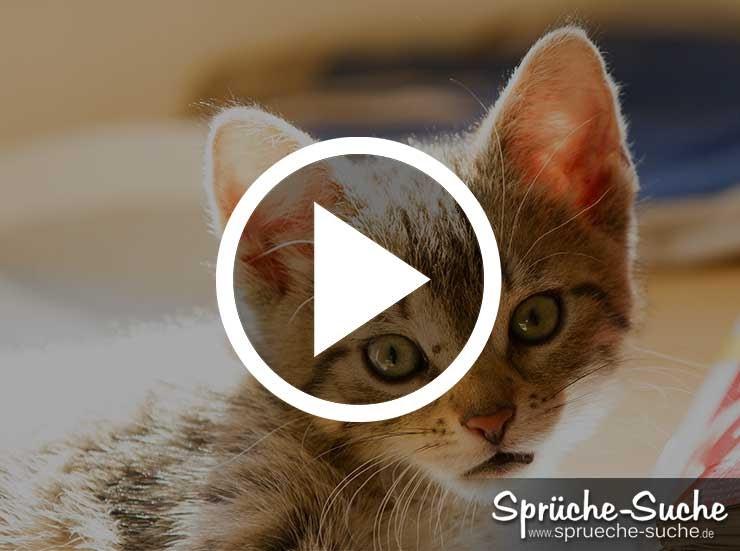 Geburtstagswünsche Hundeliebhaber  Tinnitus Free Geburtstagswünsche Katzenliebhaber