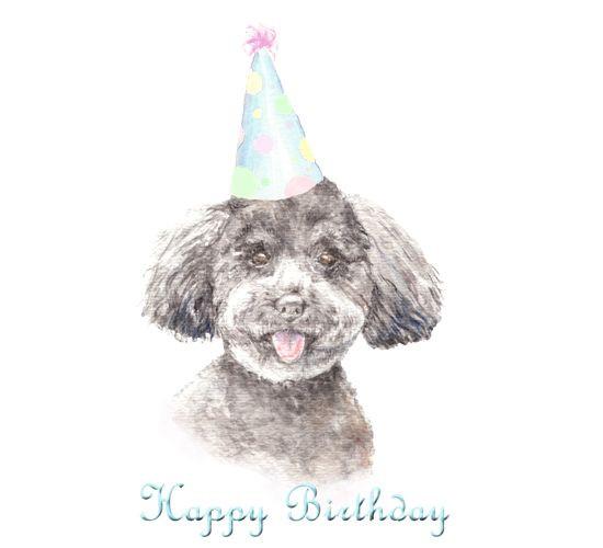 Geburtstagswünsche Hundeliebhaber  Die besten 25 Geburtstagswünsche hund Ideen auf Pinterest