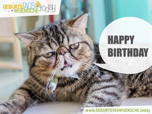 Geburtstagswünsche Katze  Lustige Geburtstagsgrüße Bild lustige Katze