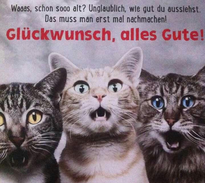 Geburtstagswünsche Katze  Pin von Haase auf Geburtstag