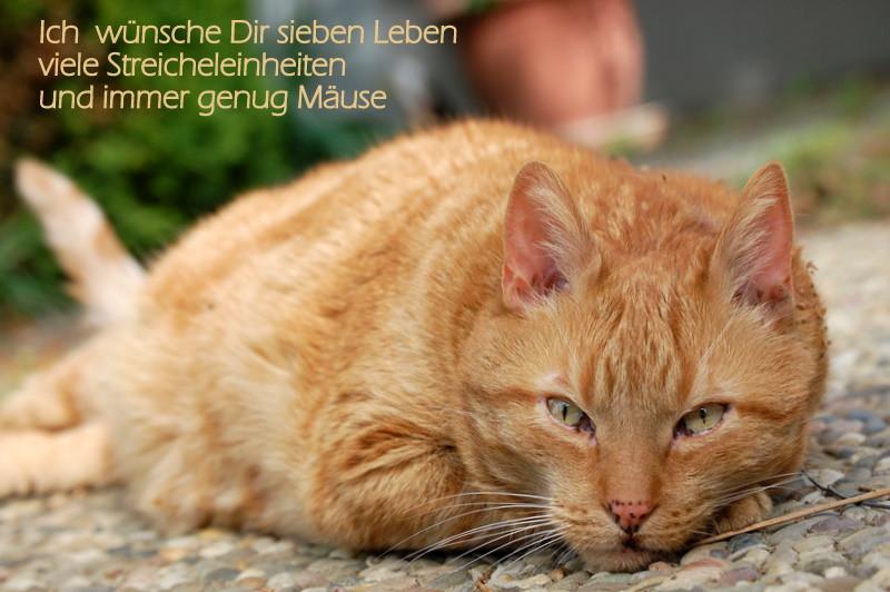 Geburtstagswünsche Katze  Happy birthday liebe Astrid Foto & Bild