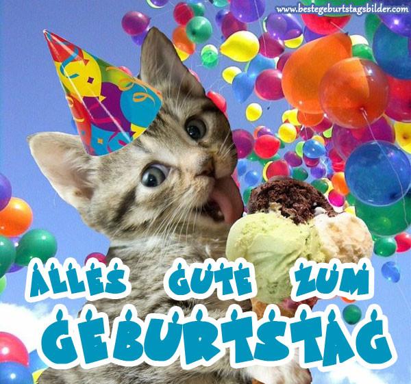 Geburtstagswünsche Katze  Geburtstagsbilder mit katzen Beste Geburtstagsbilder