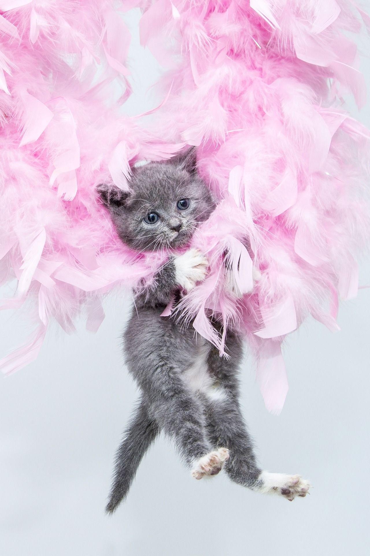 Geburtstagswünsche Katze  Geburtstagswunsche katze – Beste Geschenk Website Foto Blog