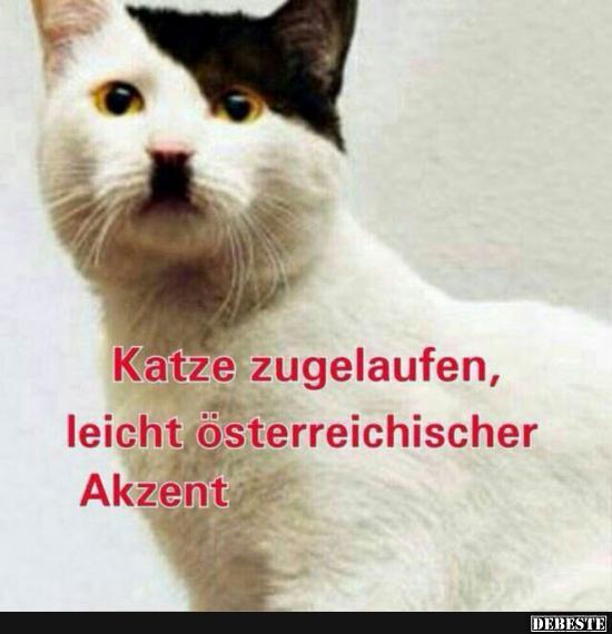 Geile Geburtstagsbilder  Katze zugelaufen leicht österreichischer Akzent