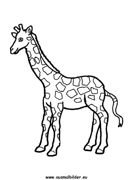 Giraffe Comic Malvorlagen  Ausmalbilder giraffe kostenlos Malvorlagen zum