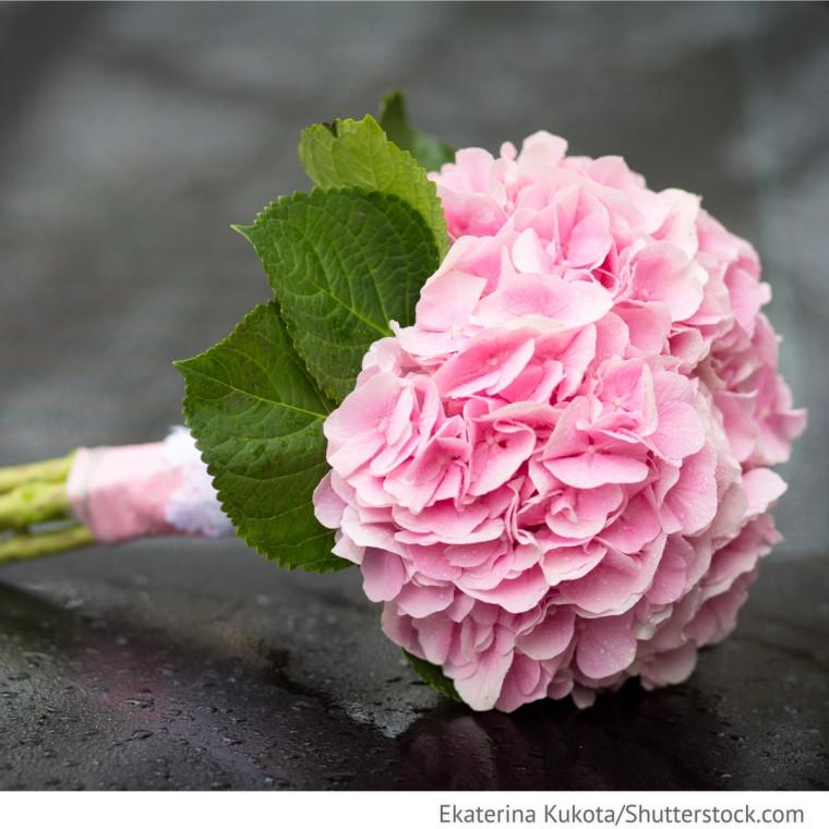 Hortensien Brautstrauß  Brautstrauß rosa Hortensien Blumenstrauß Hochzeitsideen