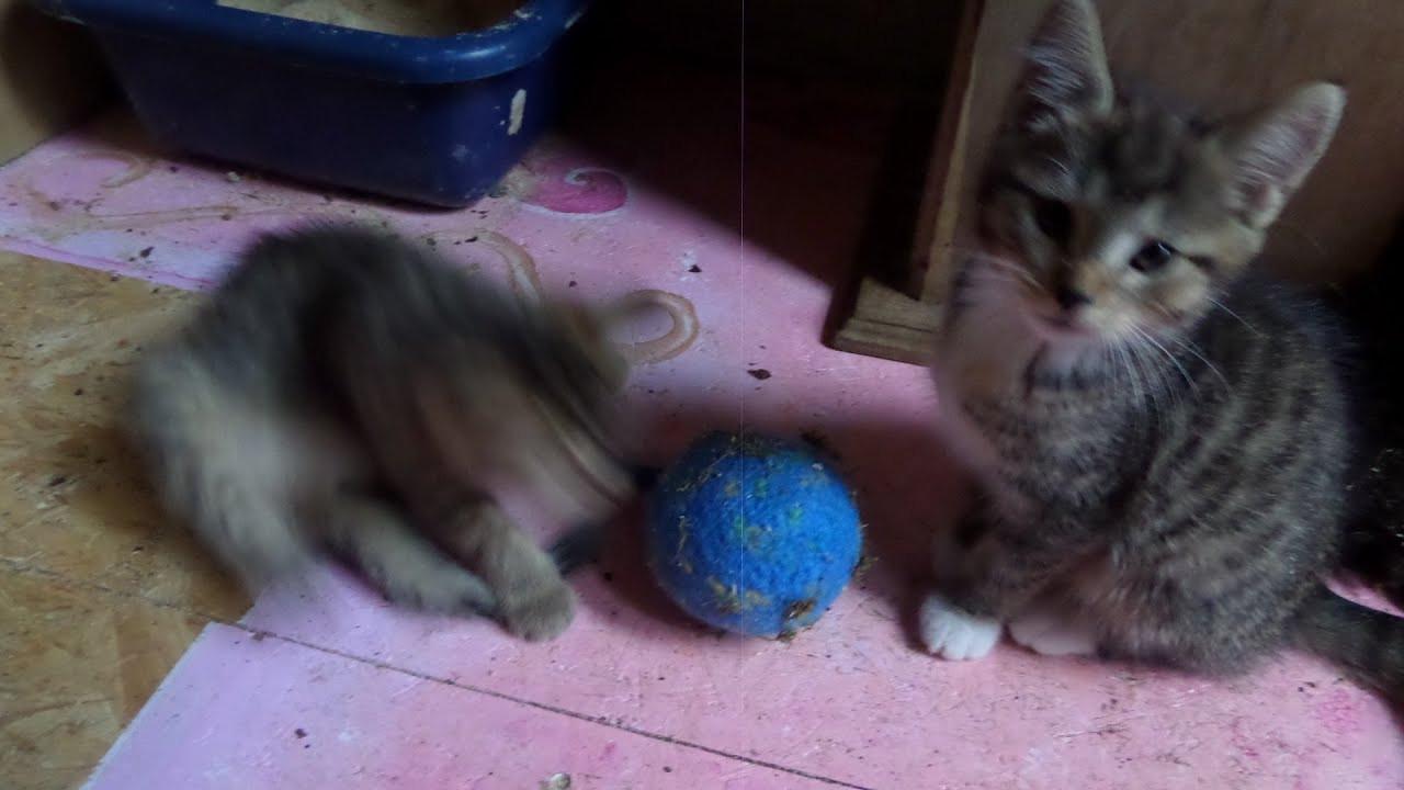 Katzen Diy  DIY TOLLES KATZEN SPIELZEUG selber machen einen Ball