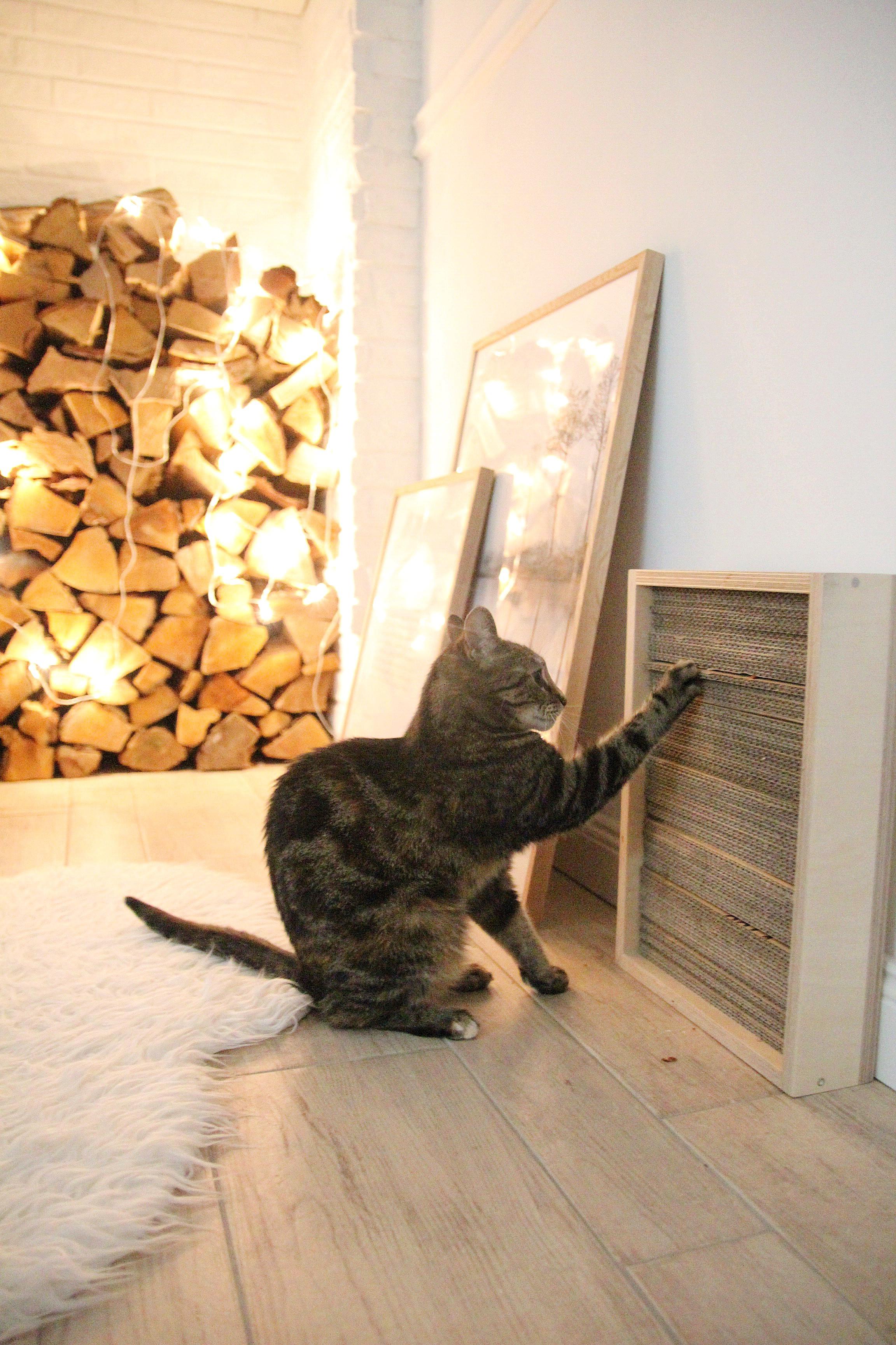 Katzen Diy  DIY Katzen Kratzbrett selber machen – DESIGN DOTS