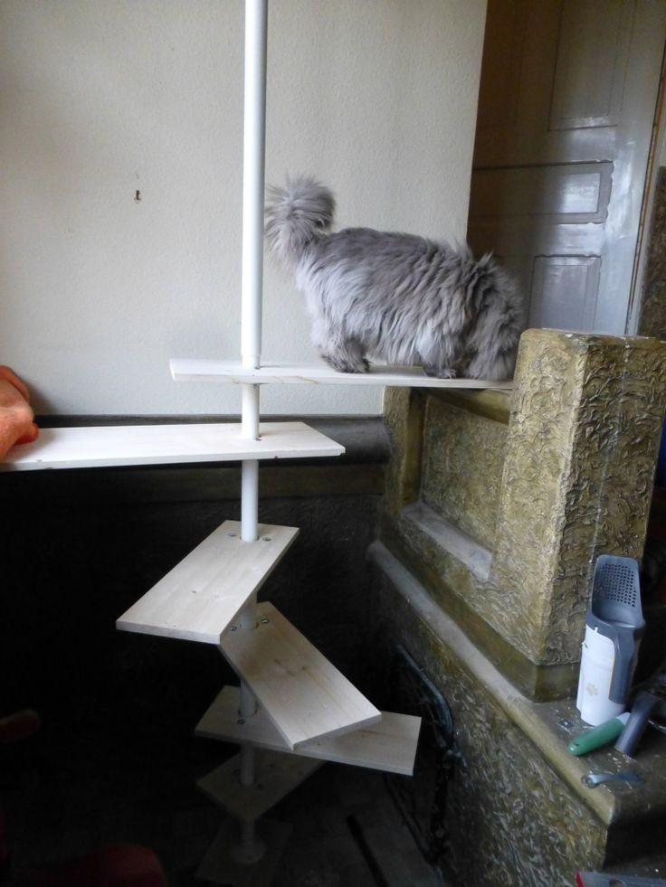 Katzen Diy  29 Best images about DIY rund um das Thema Katzen made by