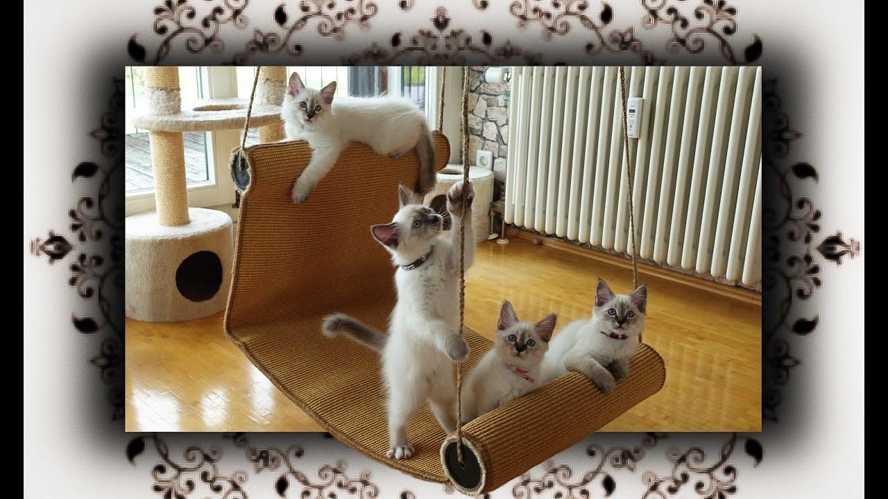 Katzen Diy  DIY 😻 Chaiselongue Schaukel für Katzen
