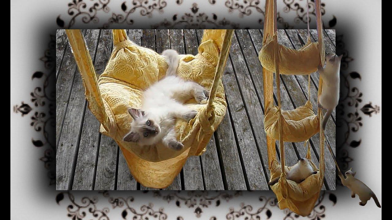 Katzen Diy  DIY 😻 Hängekissen Schaukel für Katzen