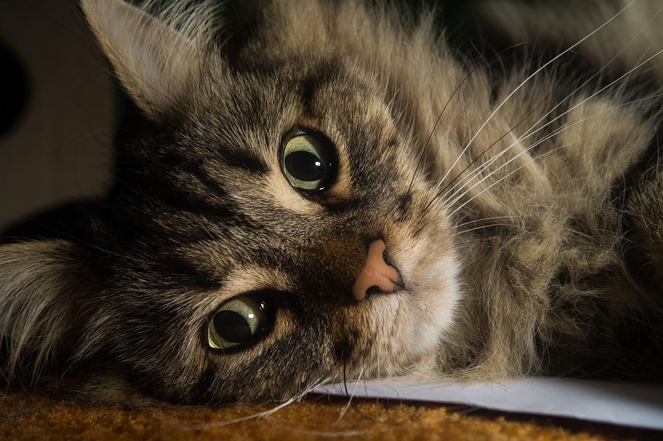 Katzen Diy  DIY – Katzenklettertonne aus Kunststoff Fass – Katzenblog