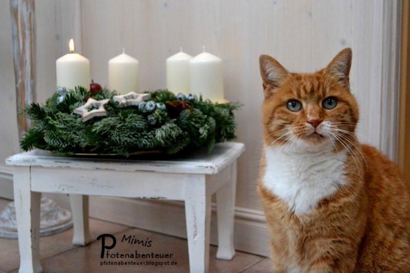 Katzen Geschenke  Adventskalender und Geschenke für Katzen und Katzenbesitzer
