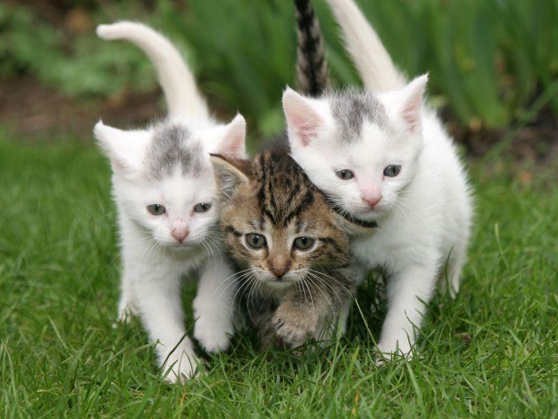 Katzen Geschenke  katzen