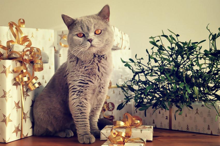 Katzen Geschenke  Tolle Geschenke für Katzen zu Weihnachten – Ho ho ho