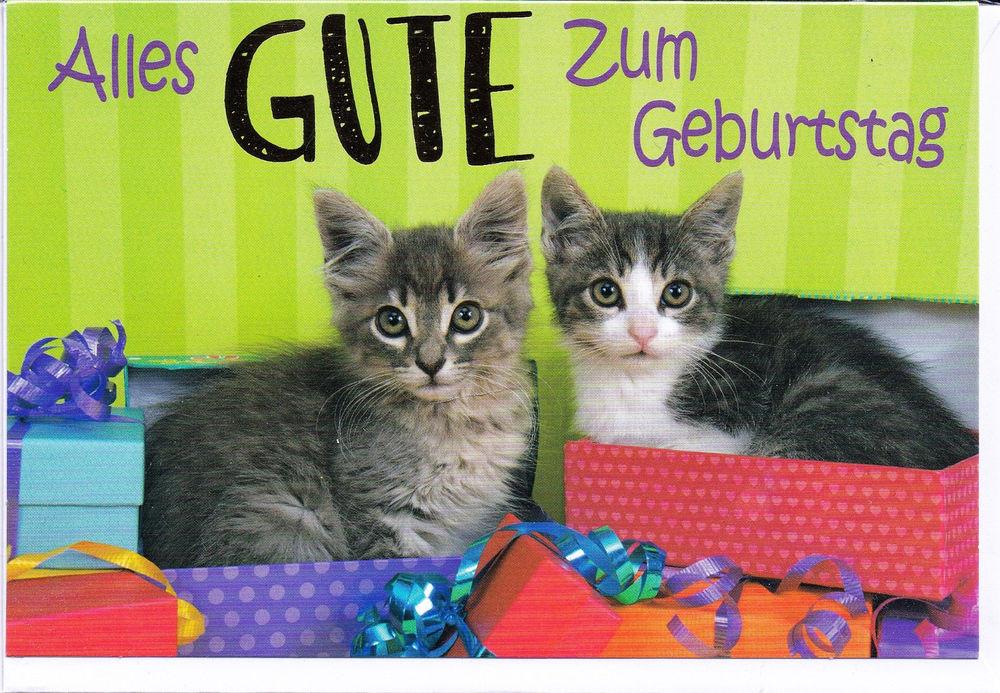 Katzen Geschenke  Klappkarte zwei kleine Katzen Geschenke und alles Gute
