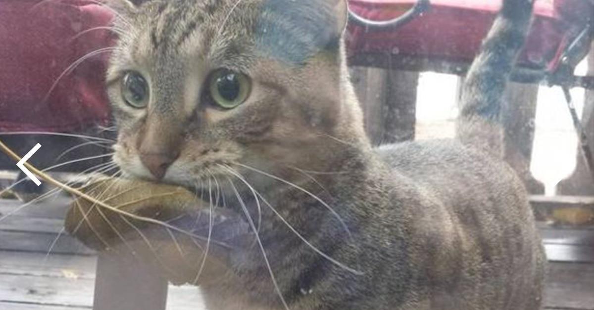 Katzen Geschenke  Überraschende Geschenke Katzen ihren Menschen machen