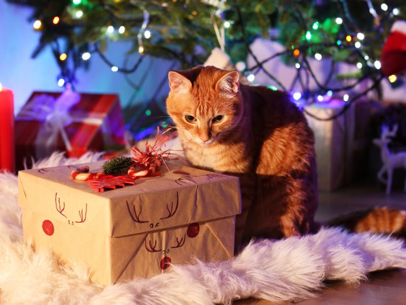 Katzen Geschenke  Geschenke für Haustiere Freude für Hunde und Katzen