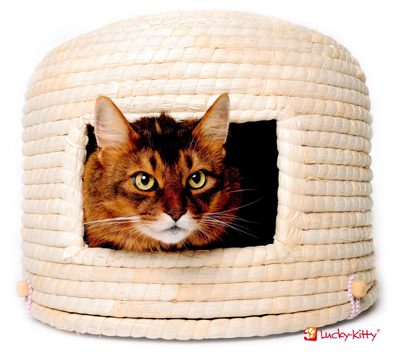 Katzen Geschenke  Tipps für Geschenke für Katzen und Katzenhalter