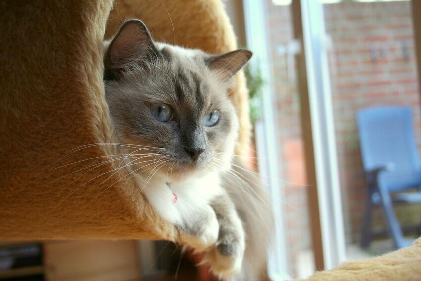 Katzen Geschenke  Witzige Geschenke für Ihre Katzen Kratzbäume vom Feinsten