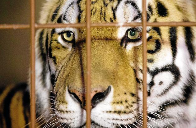 Klappern Gehört Zum Handwerk  Sanierungsfall Zoo Klappern gehört zum Handwerk