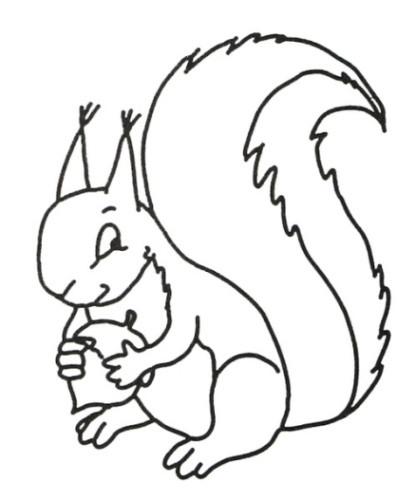 die besten malvorlagen eichhörnchen - beste wohnkultur