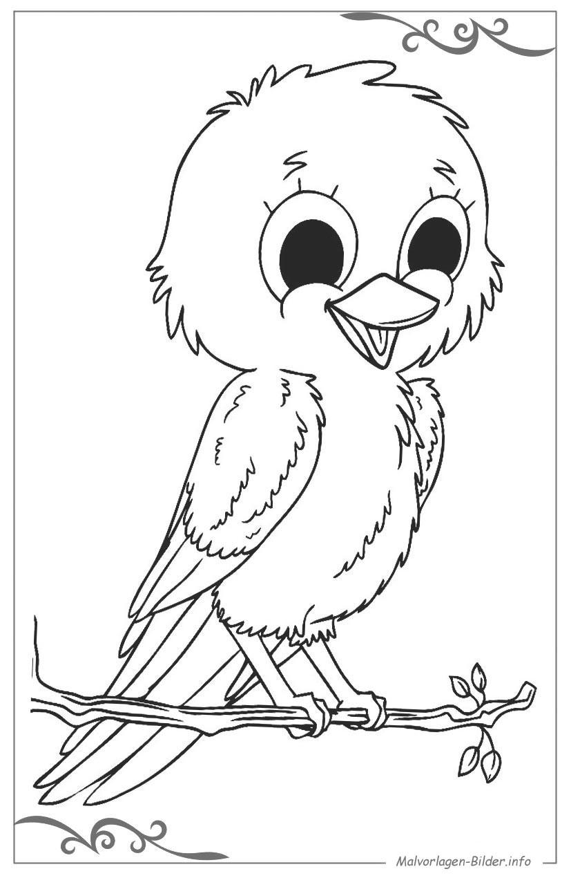 Malvorlagen Für Jungs  Vögel malvorlagen für jungs zum ausdrucken