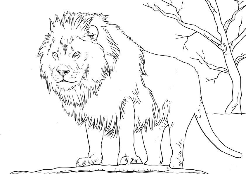 Malvorlagen Löwe  löwe 5