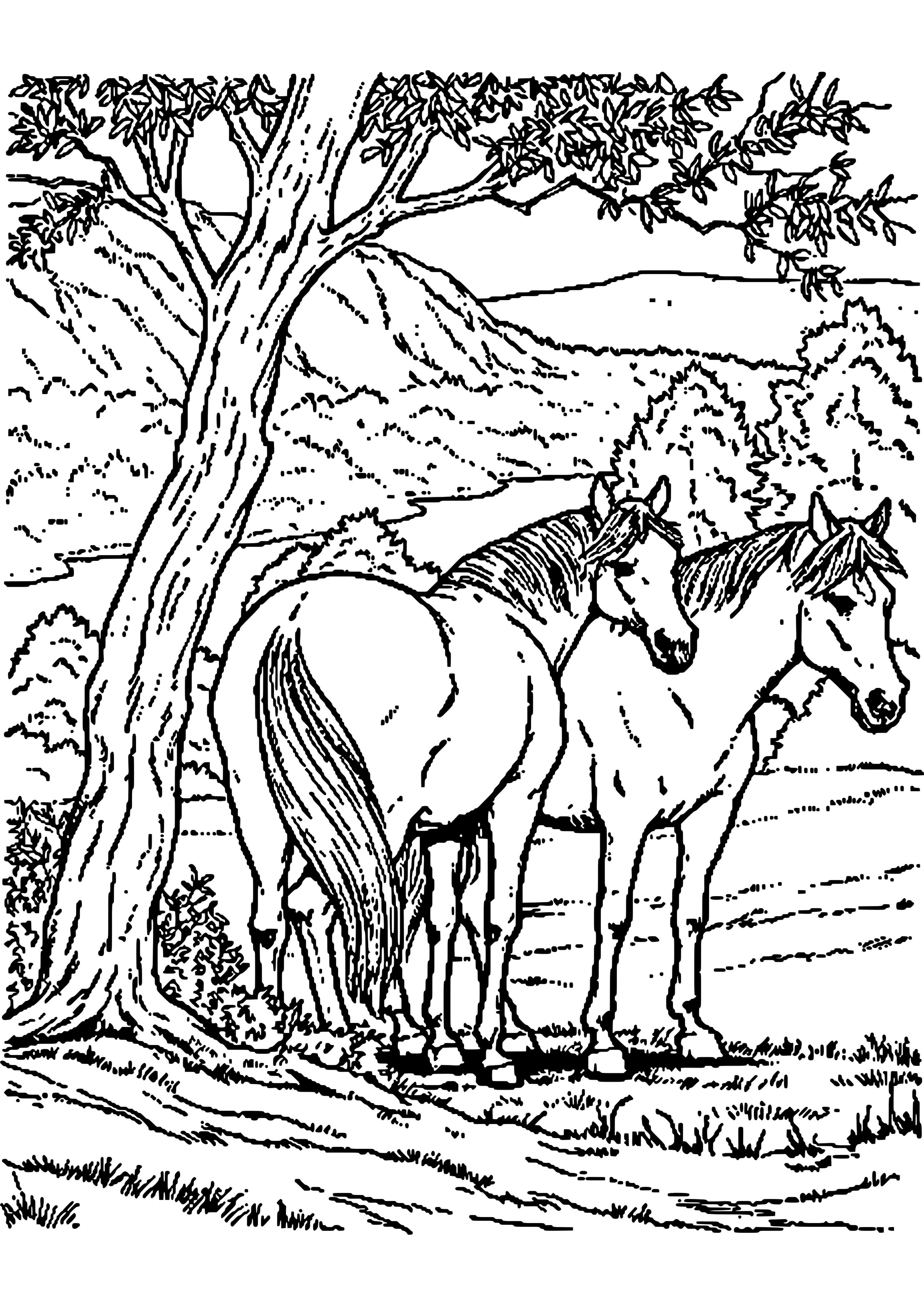 erwachsene schöne pferde ausmalbilder  ausmalbild