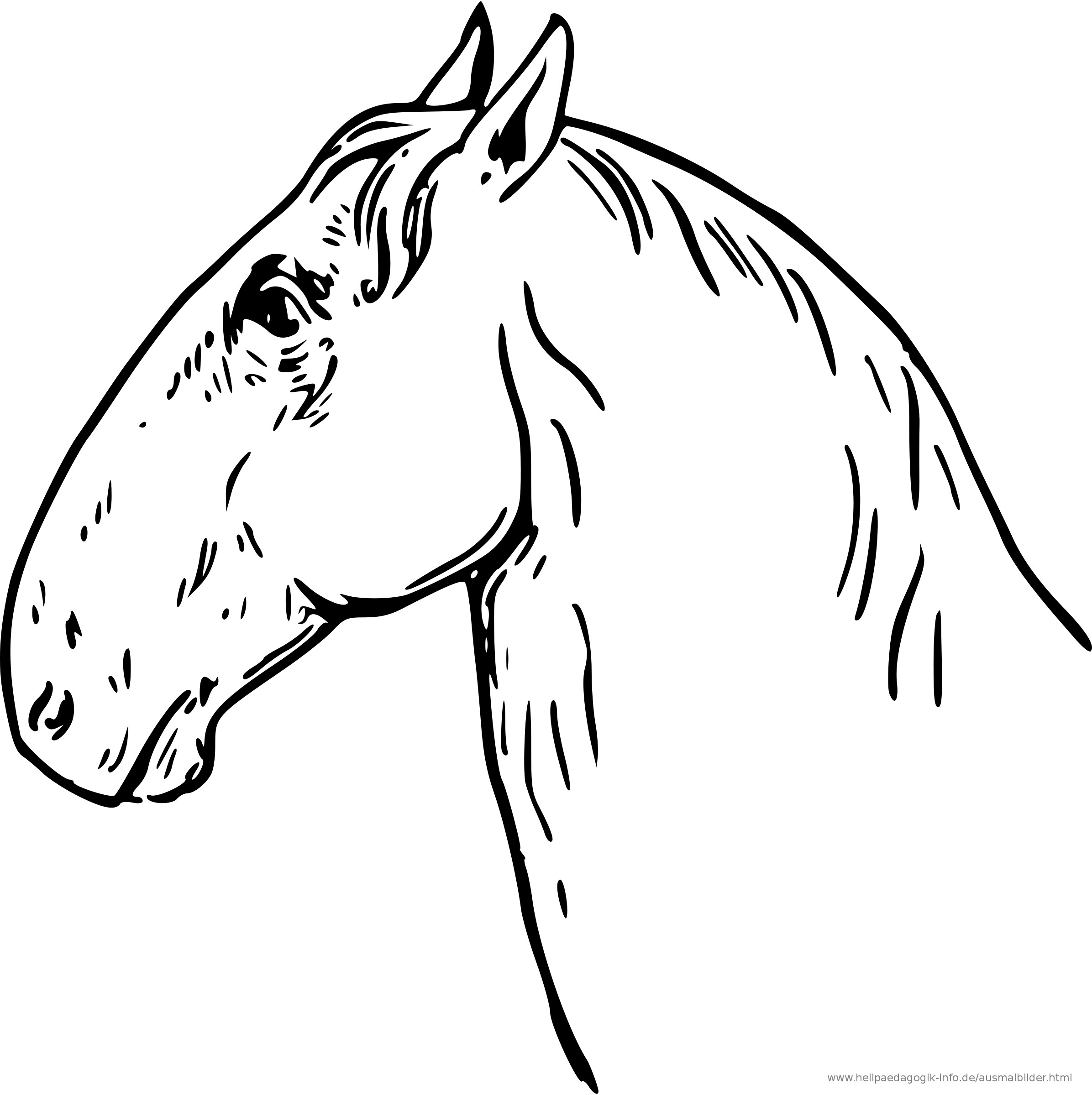 Pferdekopf Ausmalbilder  Ausmalbilder Pferde