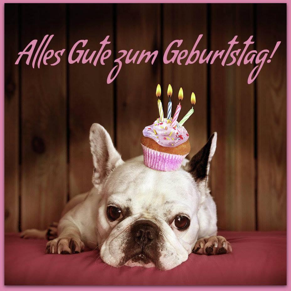 Rockige Geburtstagswünsche  Hunde mit einem Mini Geburtstagskuchen Alles Gute zum