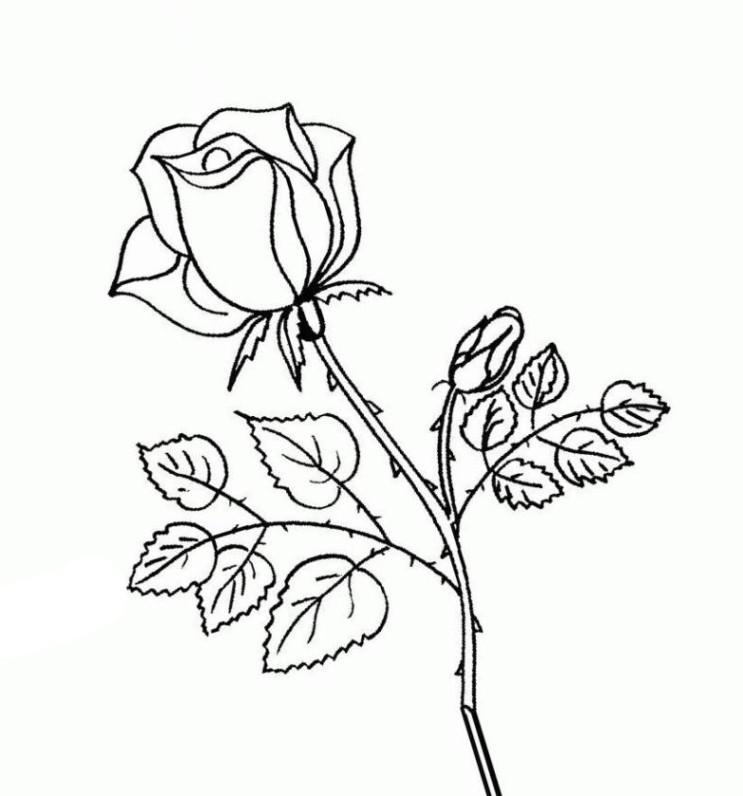 Rosen Ausmalbilder  Ausmalbilder zum Ausmalen Malvorlagen Rosen kostenlos 1