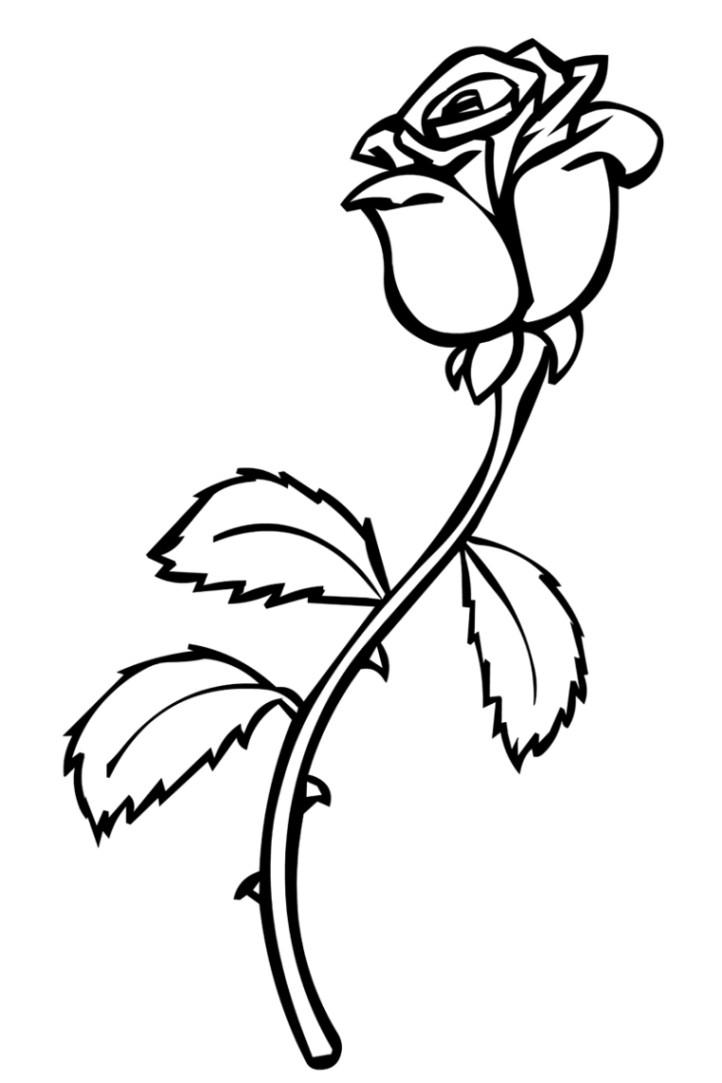 Rosen Ausmalbilder  Ausmalbilder zum Ausmalen Malvorlagen Rosen kostenlos 2