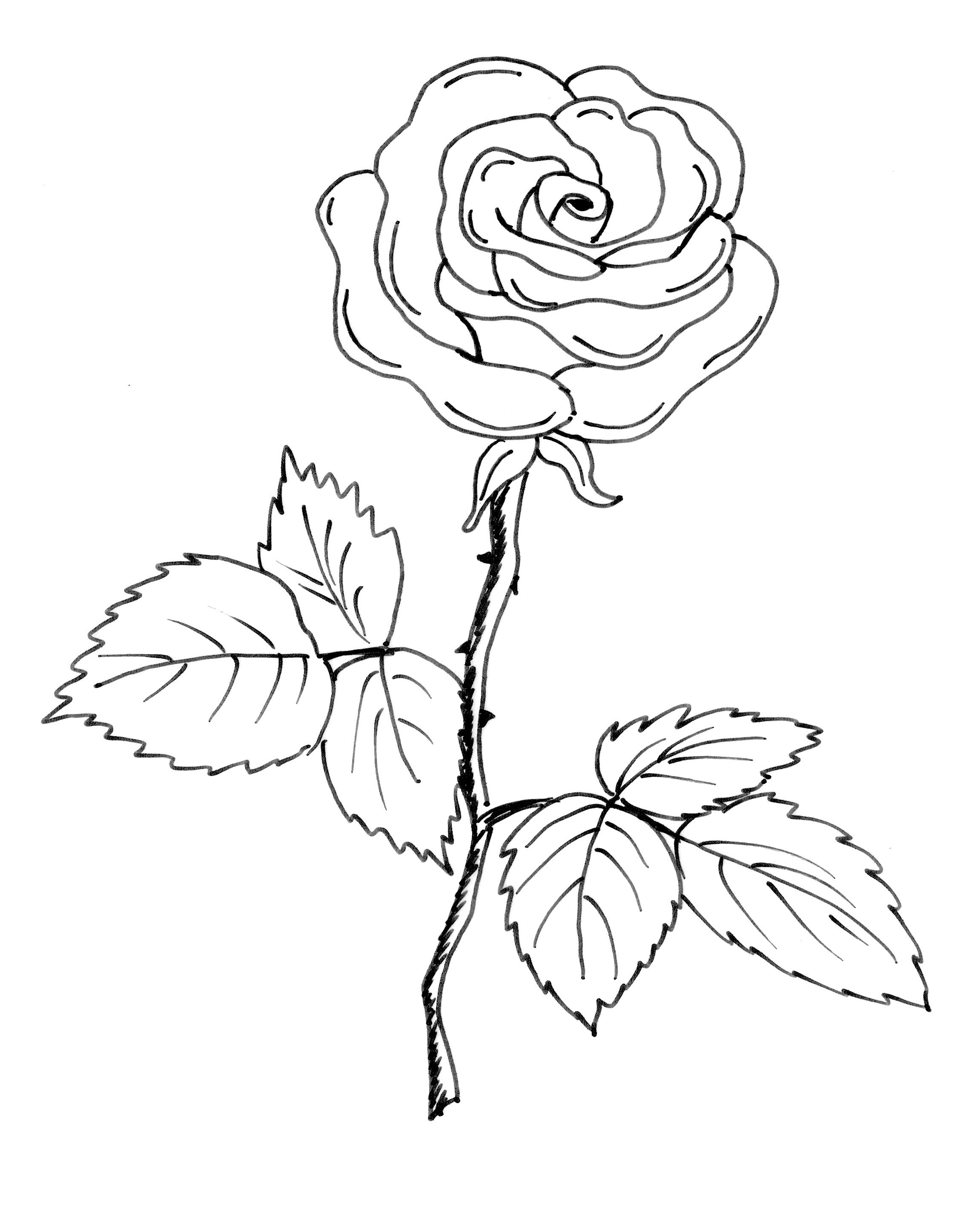 Rosen Ausmalbilder  Ausmalbilder rose kostenlos Malvorlagen zum ausdrucken