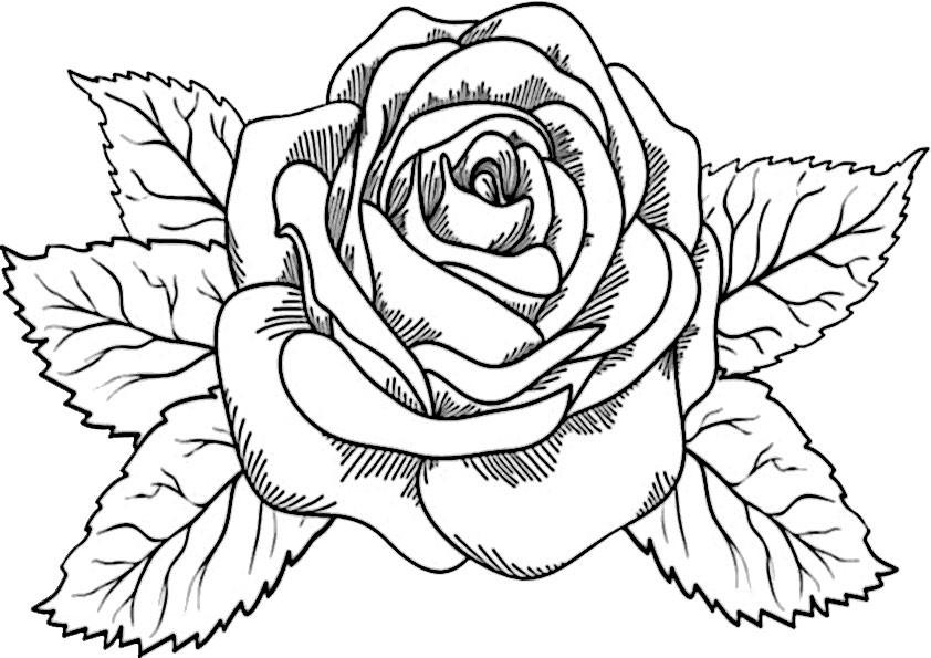 Rosen Ausmalbilder  Blumen 2