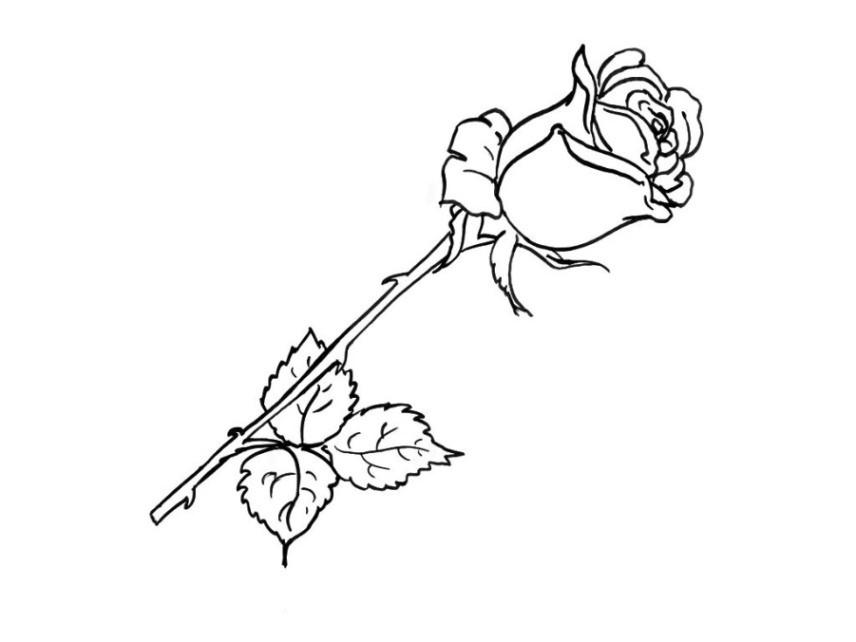 Rosen Ausmalbilder  Malvorlagen zum Ausmalen Ausmalbilder Rose gratis 2