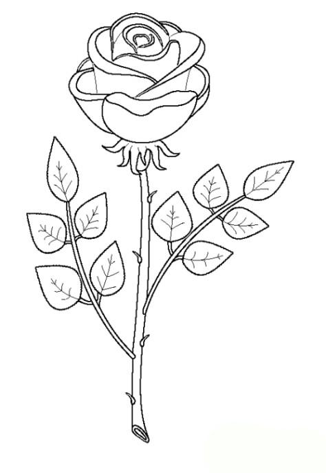 Rosen Ausmalbilder  Malvorlagen zum Drucken Ausmalbild Rose kostenlos 1