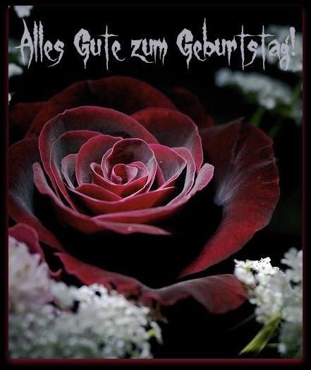 Schöne Geburtstagswünsche  Schöne rote Rose Alles Gute zum Geburtstag