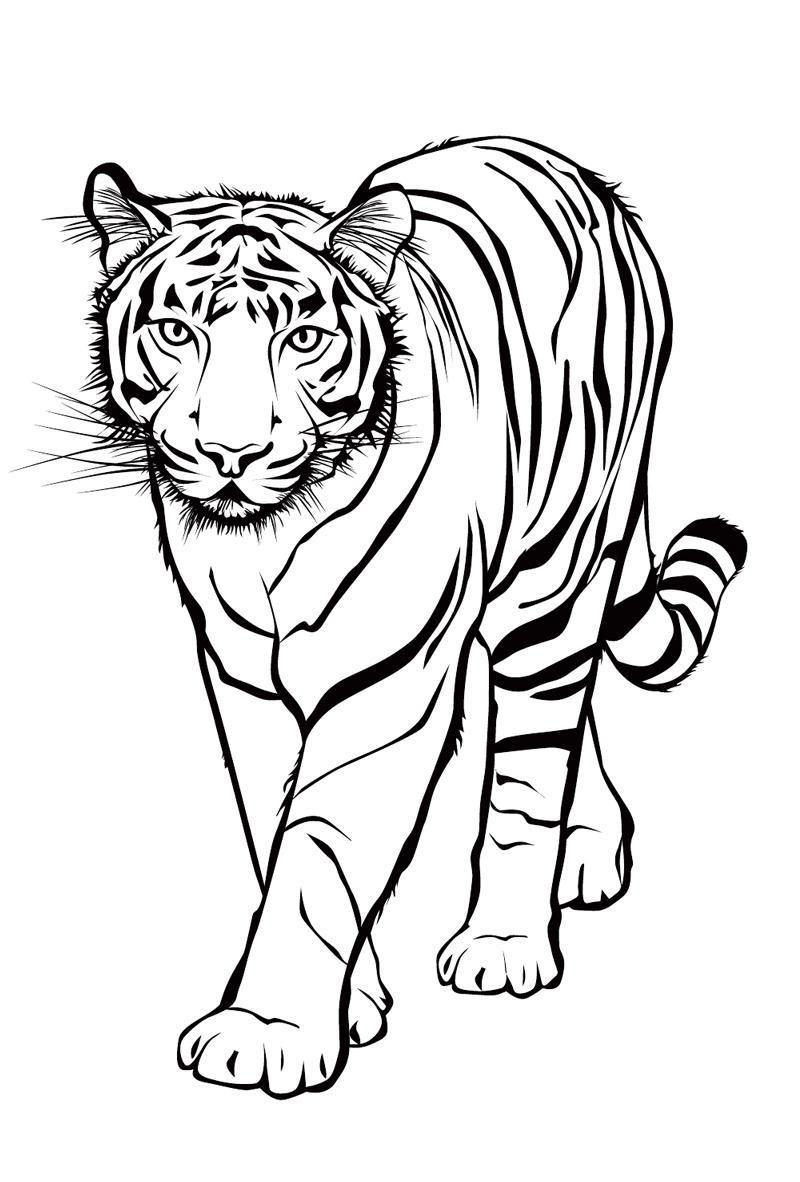 20 ideen für tiger ausmalbilder  beste wohnkultur