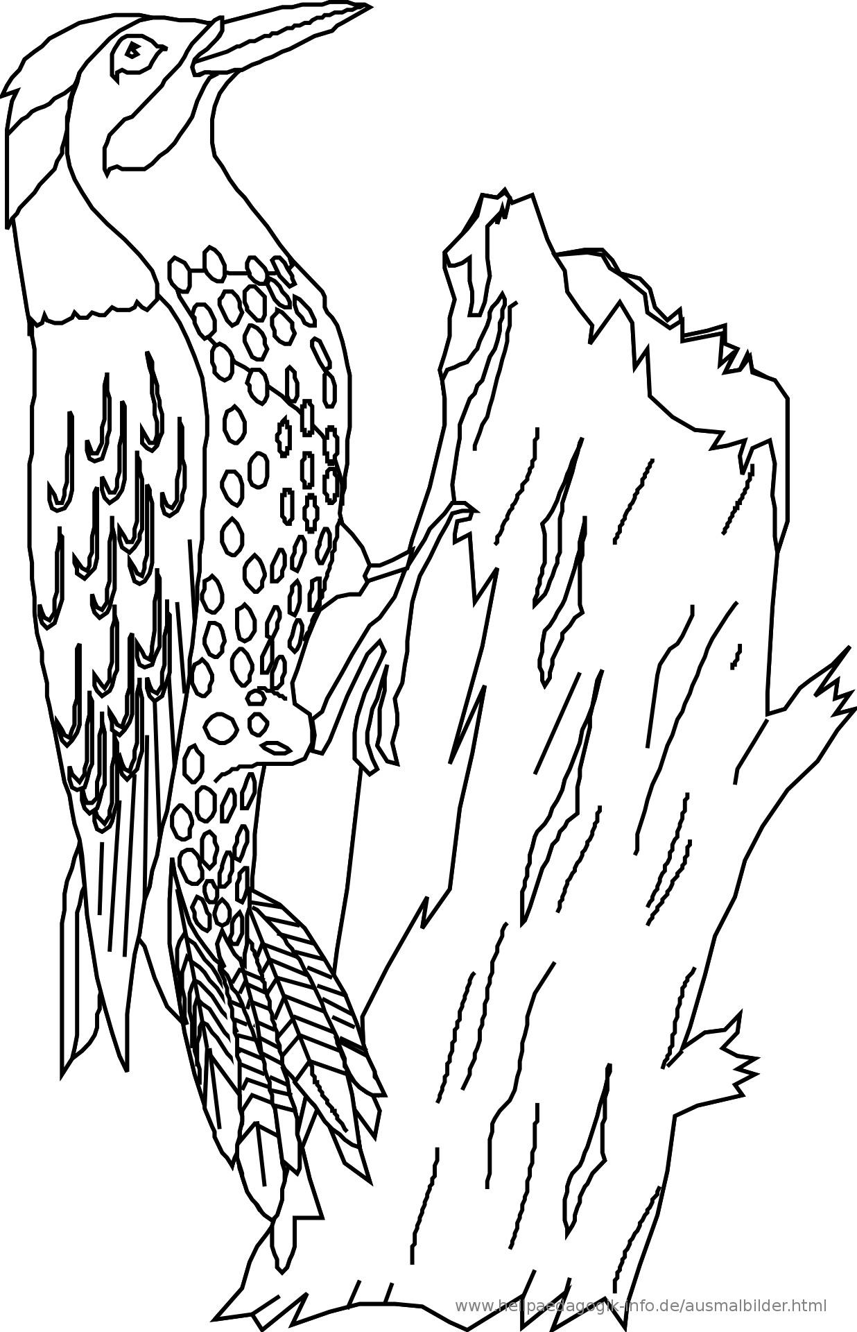 Vögel Ausmalbilder  Ausmalbilder Vögel