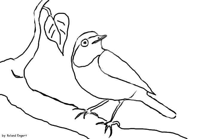 Vögel Ausmalbilder  Gartenrotschwanz Ausmalbild Naturstrolche