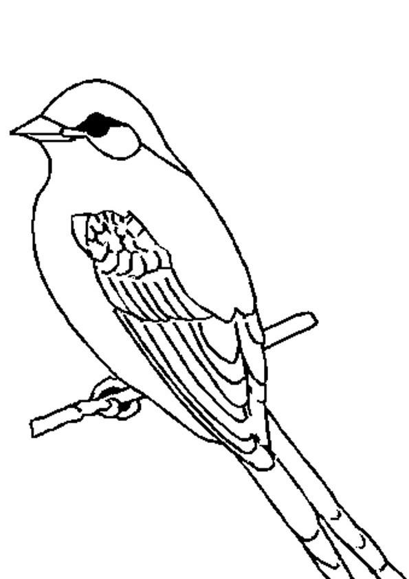 Vögel Ausmalbilder  Ausmalbilder Vögel 03