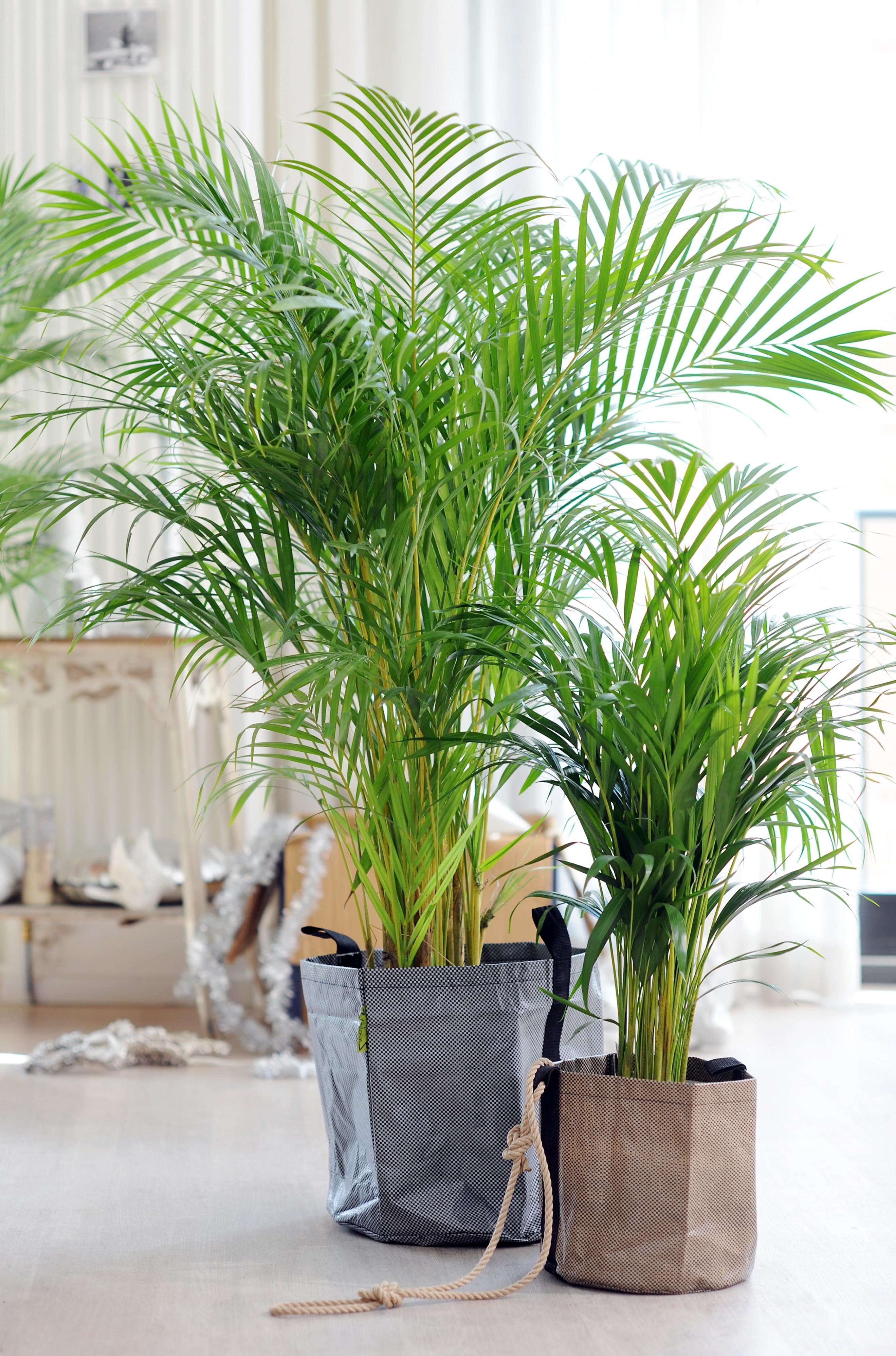 Wohnzimmer Pflanzen  Luxus Wohnzimmer Pflanzen Pflegeleicht