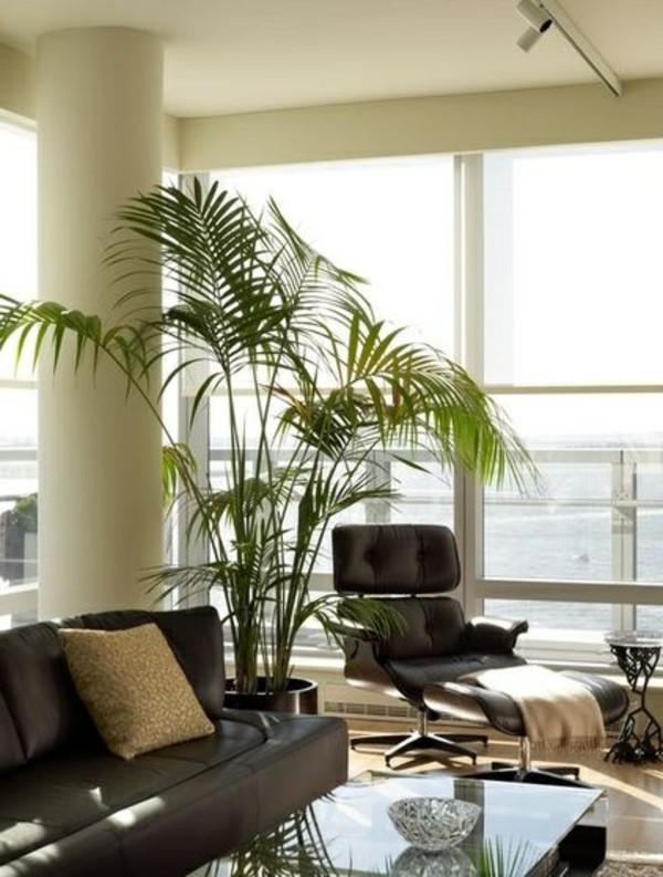 Wohnzimmer Pflanzen  Palmen fürs Wohnzimmer das Zimmer zweifellos erfrischen