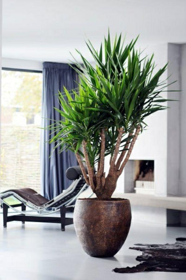Wohnzimmer Pflanzen  palmlilie yucca wohnzimmer liege pelzteppich