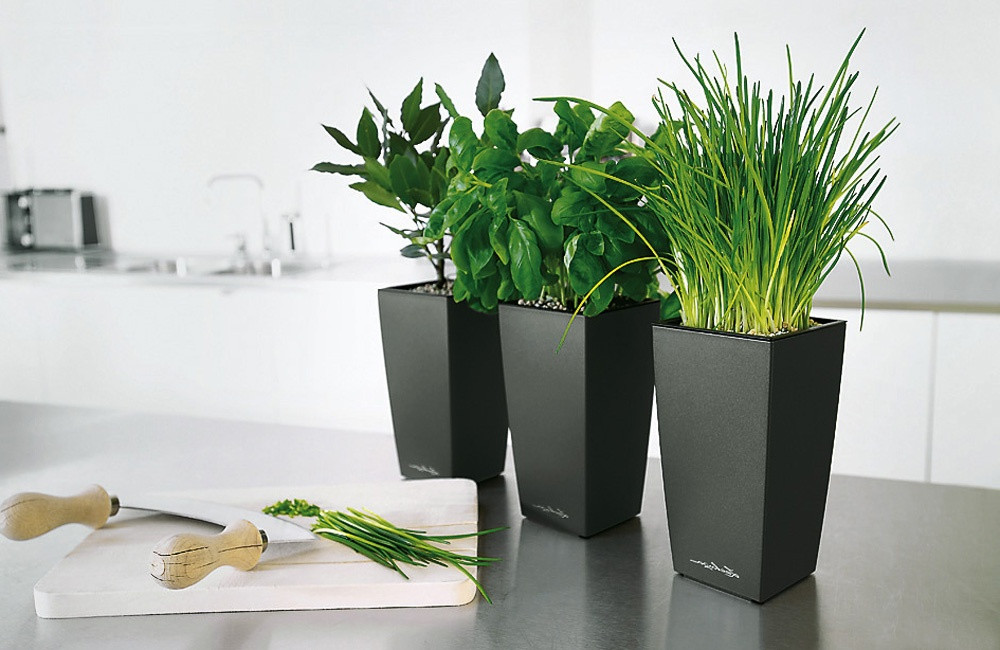 Wohnzimmer Pflanzen  Grose Wohnzimmer Pflanzen