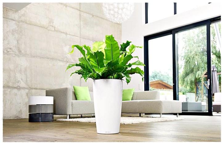 Wohnzimmer Pflanzen  Große Pflanzen Für Das Wohnzimmer